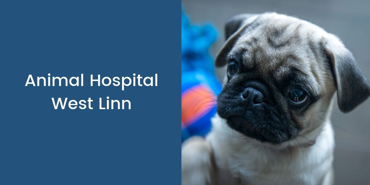 Animal Hospital West Linn