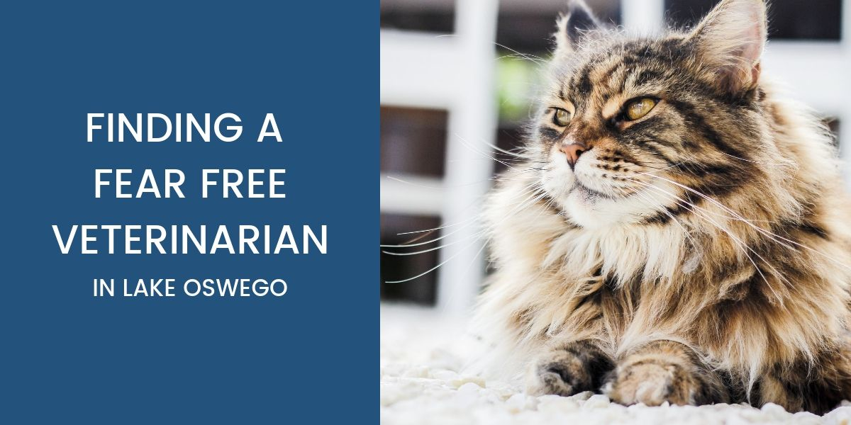 Fear Free Veterinarian in Lake Oswego