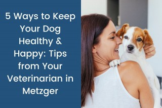5-Ways-to-Keep-Your-Dog-Healthy--Happy_-Tips-from-Your-Veterinarian-in-Metzger