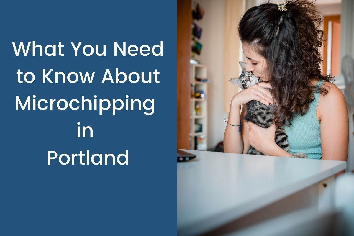 What-You-Need-to-Know-About-Microchipping-in-Portland